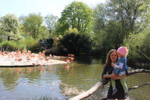 Zoo z dwulatkiem